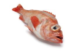 Vissoorten op een rijtje