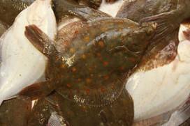 Te weinig wildgevangen Nederlandse vis in horeca