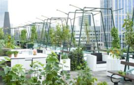 Rotterdam krijgt groen dakterras in centrum