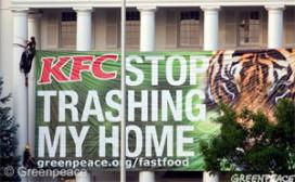 Tropisch hardhout in bakjes van KFC