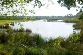 Horeca helpt Staatsbosbeheer met onderhoud Mastbos