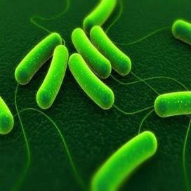 Kantoorkeukens krioelen van bacteriën
