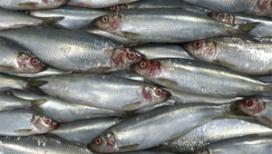 Vishandel Atlantic weer winnaar haringtest AD