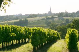 Franse wijnboeren krijgen steun na noodweer