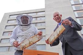 Hilton Rotterdam gaat eigen honing produceren
