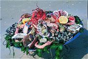 Kokkelvisserij niet schadelijk
