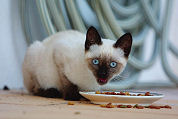 'Kattenvoer gezonder dan fastfood