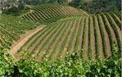 Franse wijnrevolutie op handen