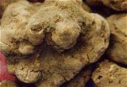 Vorst stuwt truffelprijs flink omhoog