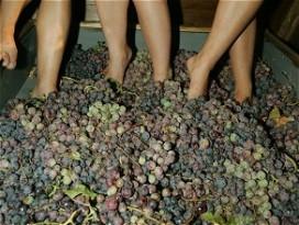 Oorlog tussen wijnboeren en overheid