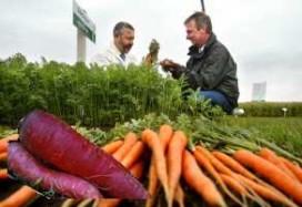 Restaurants geïnteresseerd in nieuwe paarse wortel