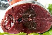 WNF eist stop op tonijnvangst