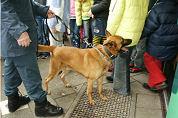 Politie zet drugshonden in bij clubs