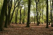Horeca maakt bos aantrekkelijk