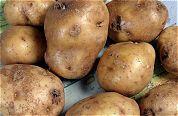 Verdeeldheid over gen-aardappel