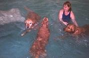 Van der Valk start hondenresort