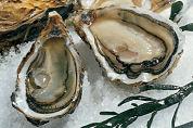 Franse oester verdringt creuse