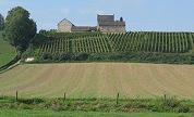 'Nederlandse wijn mist wijncultuur