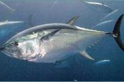 WNF in actie tegen tonijn-sushi