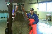 Tweede monsterheilbot voor Schmidtzeevis