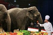Maison verzorgt kerstlunch olifanten Wintercircus