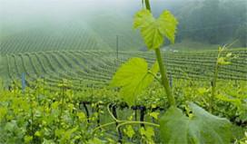 Promotiebureau Australische wijnen dicht