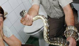 Python duikt op in toilet Maastrichts hotel