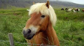 Paard verbannen uit pub