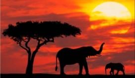 PvdA-raadslid start restaurant in Kenya