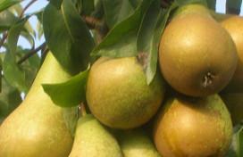 Omzet Nederlands fruit toegenomen