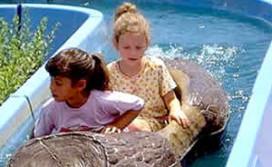 Kinderen beslissen mee over vakantie