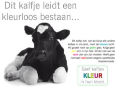 Wakker Dier vraagt groothandels te stoppen met blank kalfsvlees