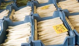 Sjako Minderhout maakt beste asperge amuse