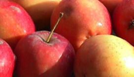Appels promoten bedrijven Hennie van der Most
