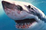 Dineren tussen de haaien