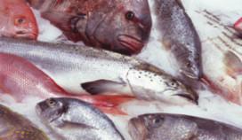 Wageningense professor onderzoekt of vis gezond is