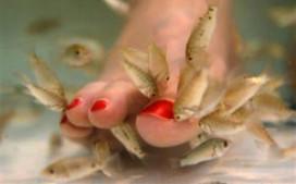 Visjes knabbelen aan tenen bij strandtent