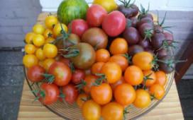 Nederlandse vruchtgroenten op Duitse snelweg