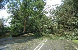 Dak restaurant Puur geraakt door boom