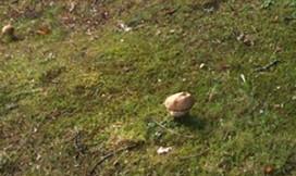 Eekhoorntjesbrood vroeg dit jaar