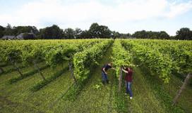 Achterhoek introduceert wijnroutes