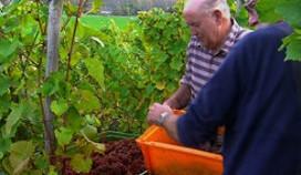 Cateraar Ria Joosten speelt rol bij keurmerk Limburgse producten