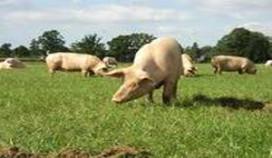 Dierenwelzijn belangrijk bij aankoop vlees