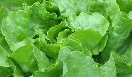 Prijs van groente omhoog door droogte