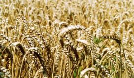 Oxfam Novib: voedselprijzen stijgen met 180 procent