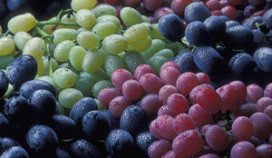 Pallas Wines neemt Great Grapes over