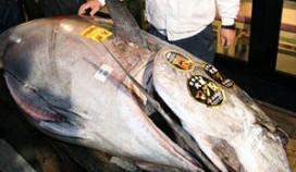 Restaurant koopt tonijn voor 567.000 euro