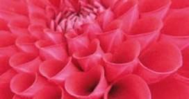 Sterrenkoks inspireren bloemencorso