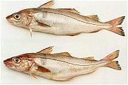 Visbureau wil jongeren aan de vissnack helpen