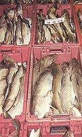Boze vissers blokkeren havens